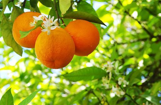 Usda Gardening Zone 7 Lovetoknow