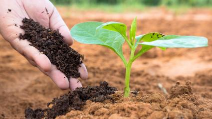 Composition of Organic Fertilizer