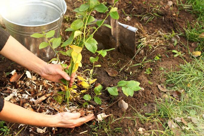 mulching_soil.jpg