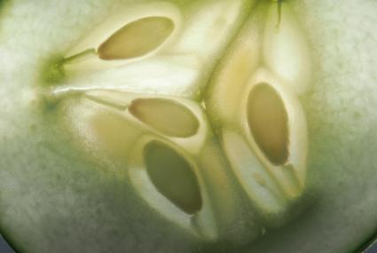 Cucumber seeds macro