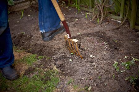 Tilling soil with pitchfork