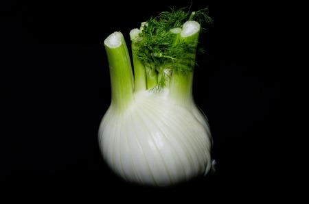 Herb fennel bulb