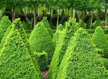 Green Mountain Box Trees