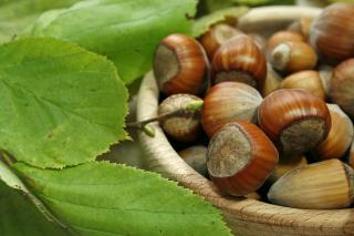 Hazelnuts in bowl closeup