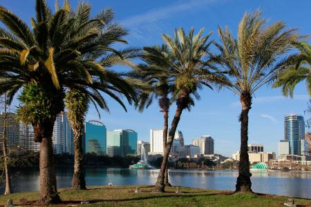 Palm trees in Orlando, Florida