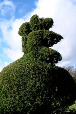 yew tree topiary