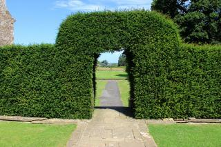 Yew topiary arch in garden