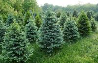 Pine Farm