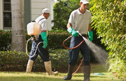 Gardeners spraying plants
