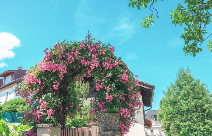 Arch passage with pink roses