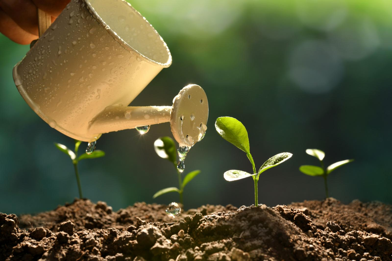4 Plant Growth Factors That Affect All Plants | LoveToKnow
