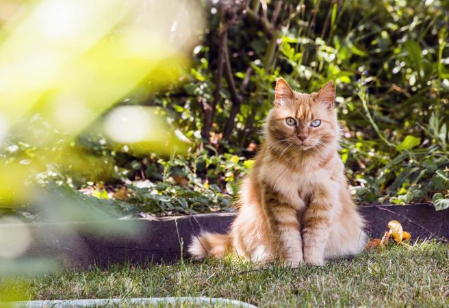 Cat sitting in backyard grass