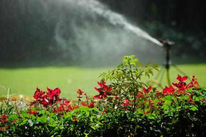 Sprinkler in a yard