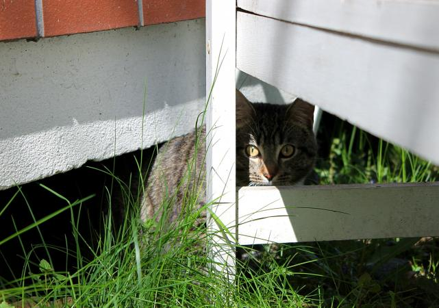 Cat Hiding In Backyard