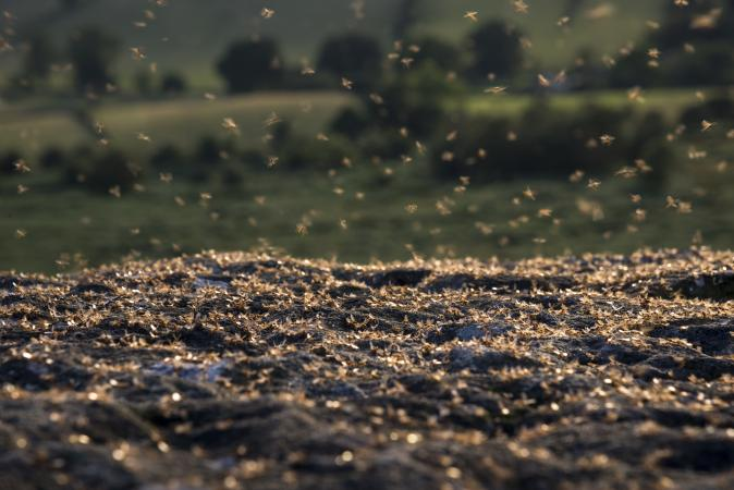 Mass of flying ants on rocks