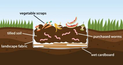 Worm Bed Layers