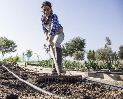 Woman preparing garden for tomatoes