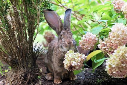 Rabbit lurking by flowering plants