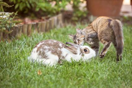 Rabbit and cat in the garden