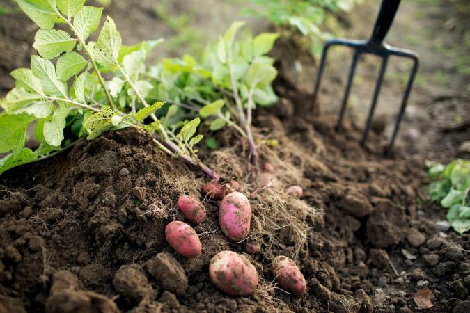 Soil in vegetable garden