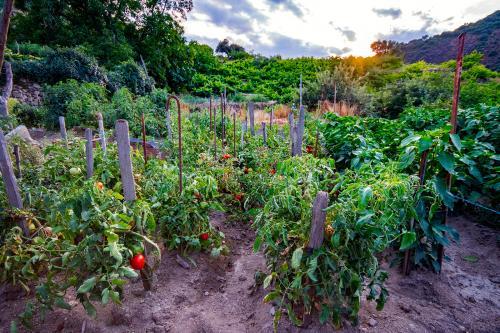 garden soil with vegetable plants