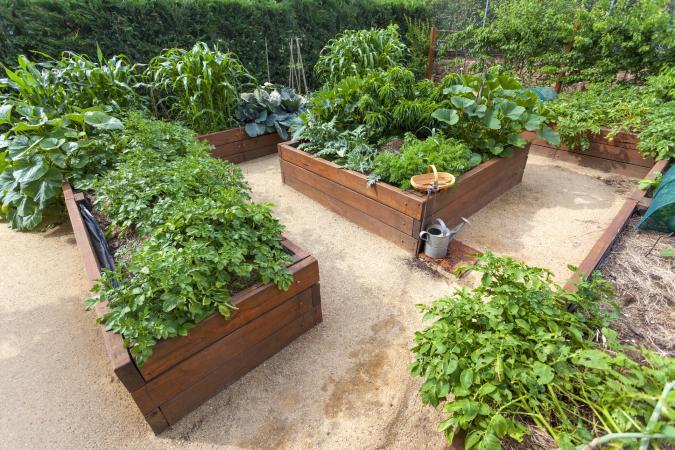Backyard vegetable garden in raised beds