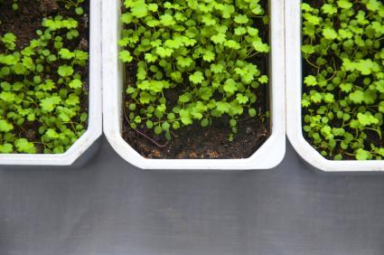 Plastic raised garden bed