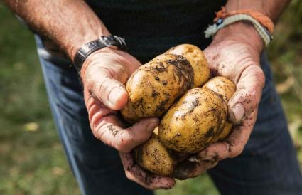 man holding dirty potatoes