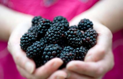Female holding blackberries