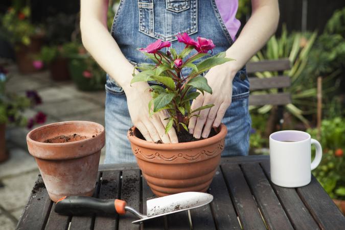 Woman repotting plant