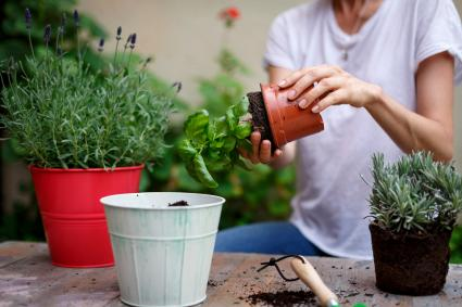 Woman removing plant from flowerpot