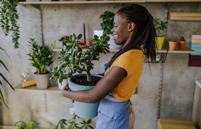 Repot Succulents Safely
