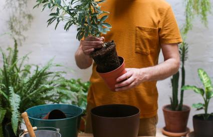 Man repotting green plant
