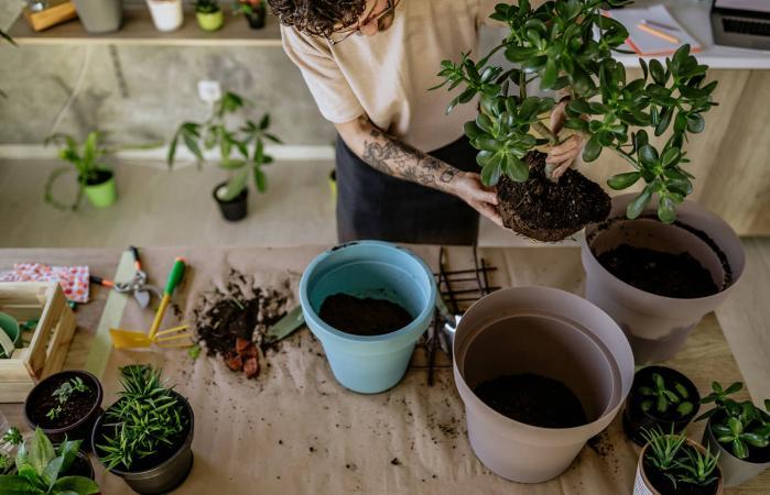Florist Man Seedling Plants