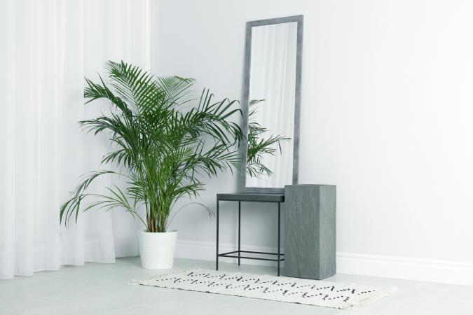 Modern interior with large mirror and beautiful majestic palm plant