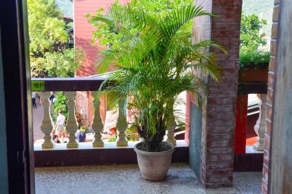Majestic Palm on the balcony