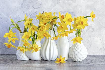 Narcissus flowers in vases