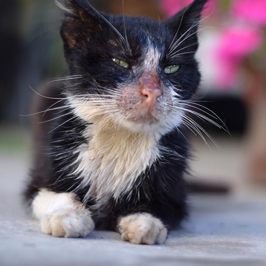https://cf.ltkcdn.net/gatos/images/slide/242378-850x850-gato-enfermo-y-grasiento.jpg
