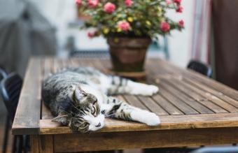 Gato tratando de mantenerse fresco