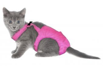 Gatito en pañales
