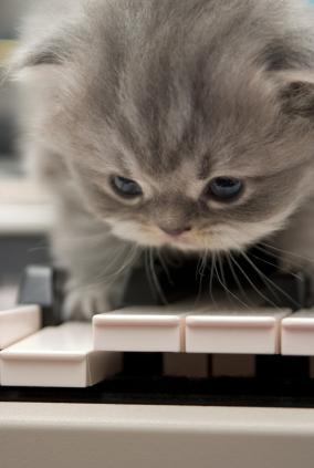 gatito haciendo musica en piano