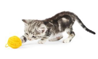 gatito con hilo