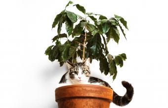 gato escondido en una maceta