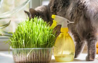 gato con contenedor de hierba