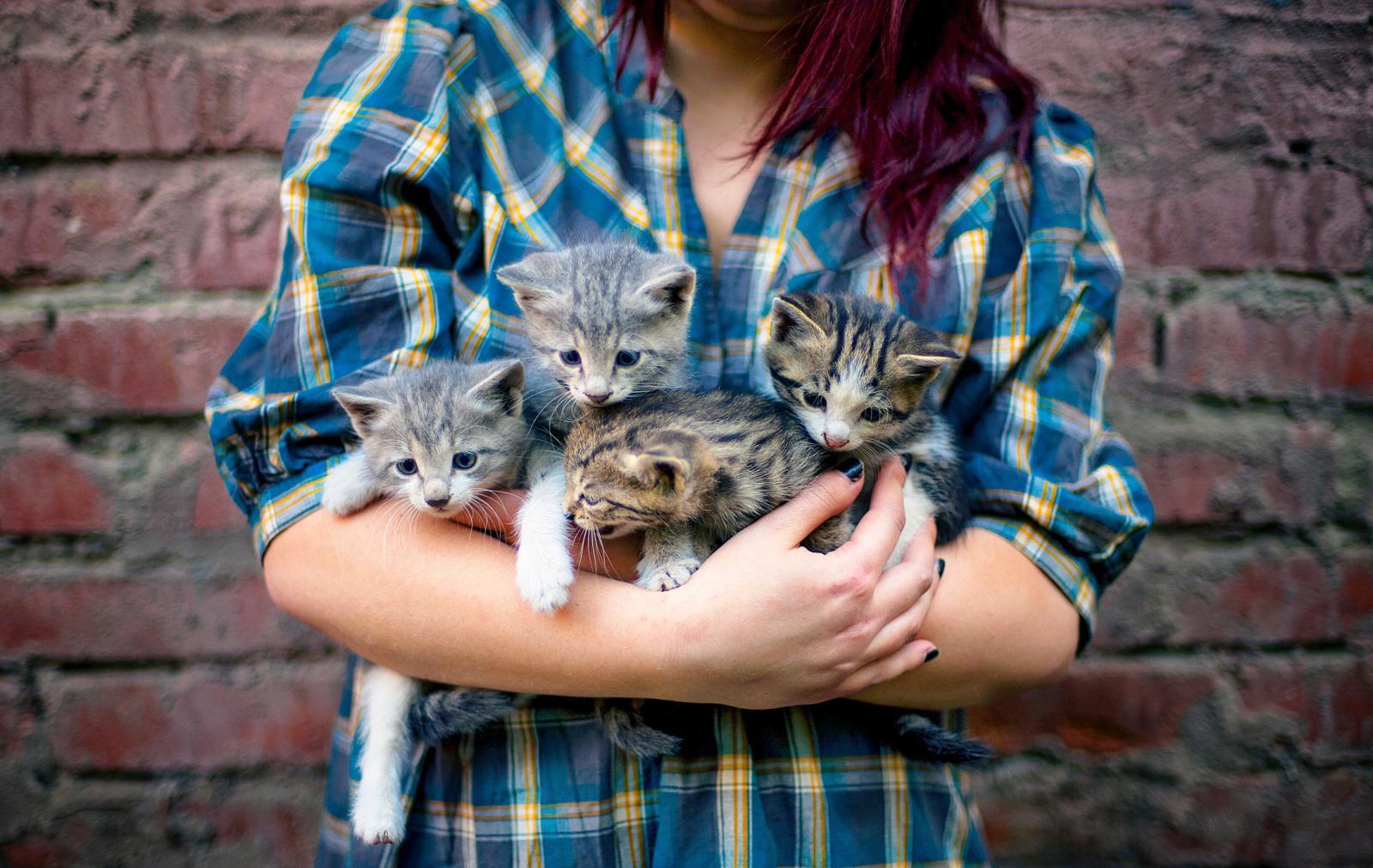 Chica con sus gatitos