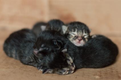 Pequeños gatitos recién nacidos