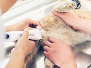 Personas afeitando gatos
