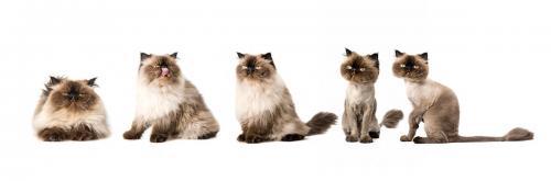 Antes y después de afeitar al gato
