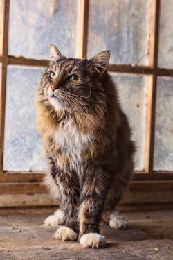 Gato tabby anciano