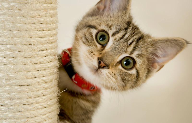 Etapas en el desarrollo de los gatitos   LoveToKnow